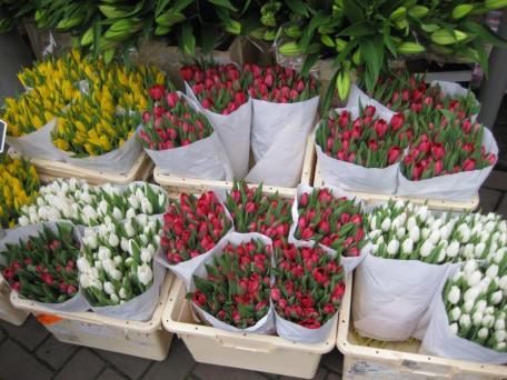 Amsterdam- Flower Market 2