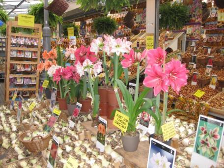 Amsterdam- Flower Market 1