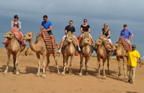 Morocco- Tangier Camels 1
