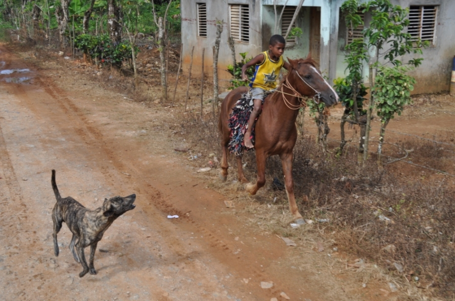 Dominican Republic- Samana- Dog and Horse 1