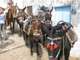 Greece- Santorini- Donkeys 1