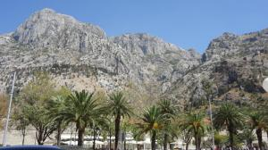 Montenegro- Kotor- Mountains and Palm Trees 1