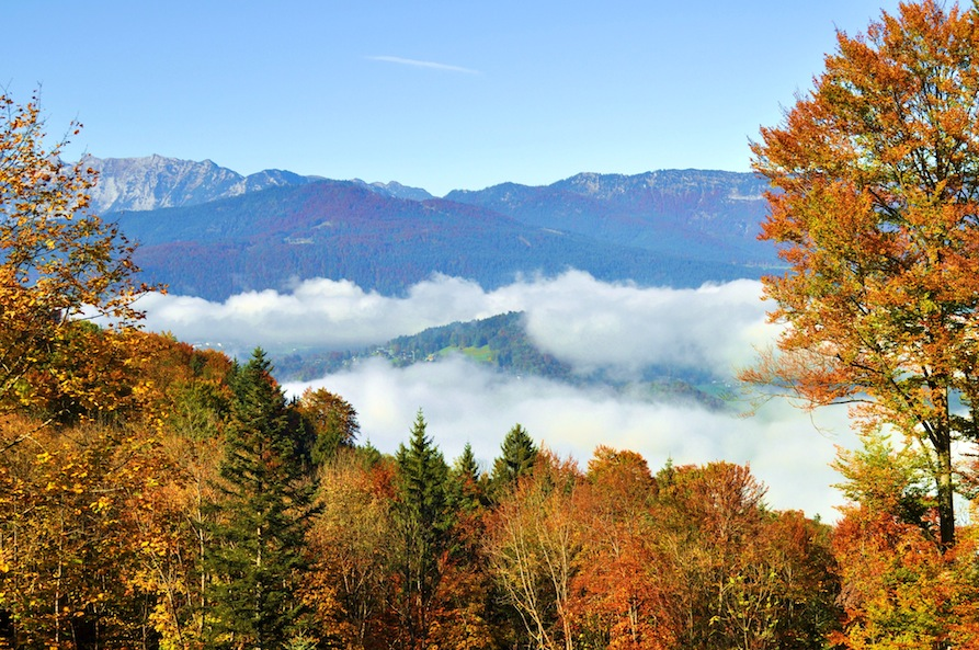 Germany- Obersalzberg- Fall Foliage
