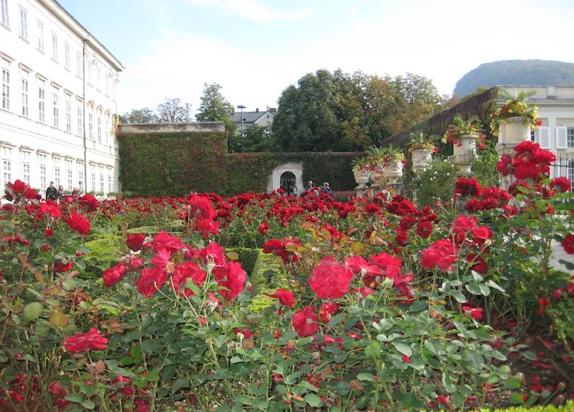 Austria- Salzburg- Rose Garden 1