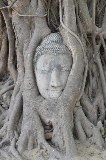 Thailand- Ayutthaya- Buddha Head in Tree 1