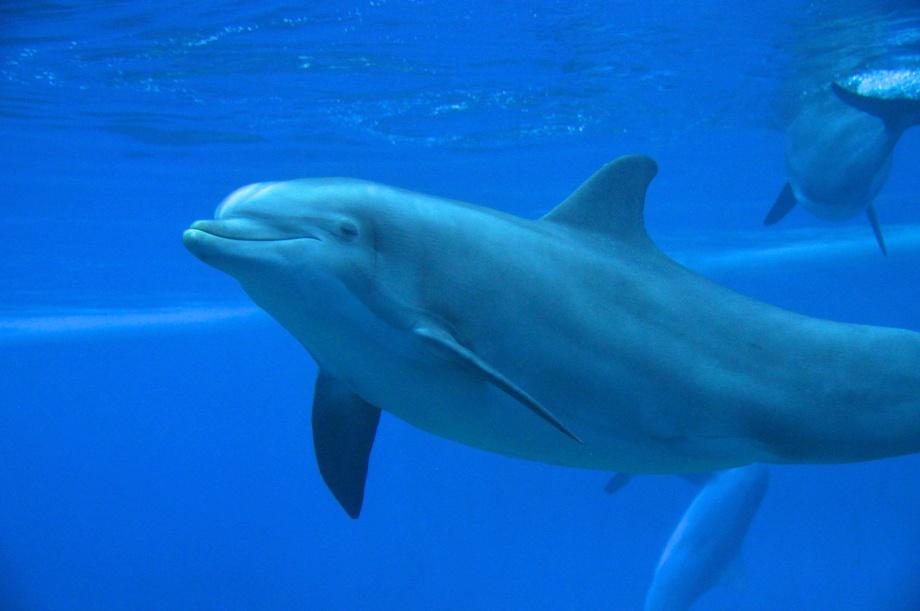 Nevada- Las Vegas- Dolphin 1