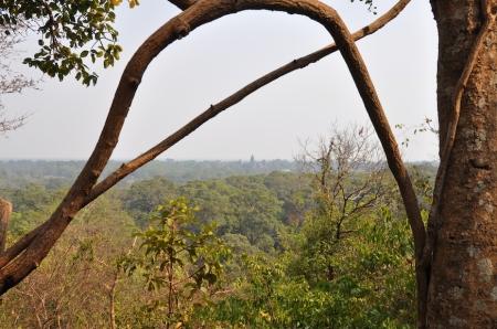 Cambodia - Siem Reap - Jungle 1