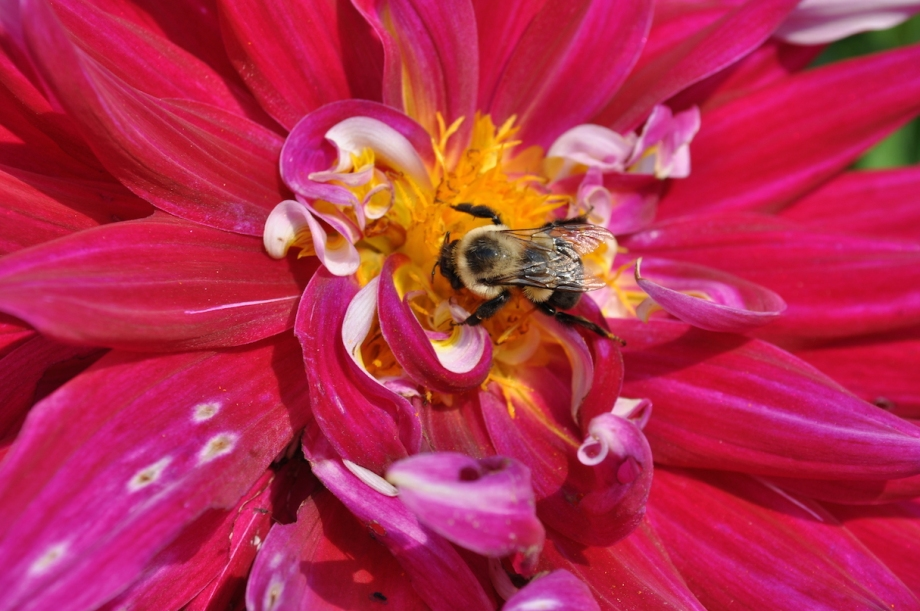 Longwood Gardens - Pennsylvania - Bee 1