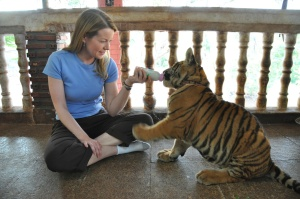 Thailand - Kanchanaburi - Tiger Feeding 1