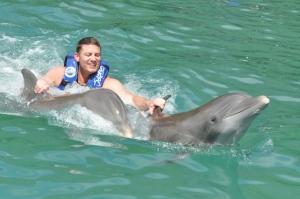 British Virgin Islands - Tortola - Dolphin Swim 2