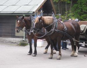 Neuschwanstein - Germany 5 Horses